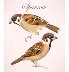Two detailed sparrows vector
