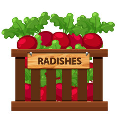 Wooden crate of radishes vector
