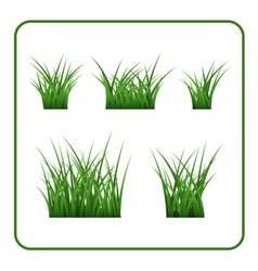 Green grass bushes isolated vector