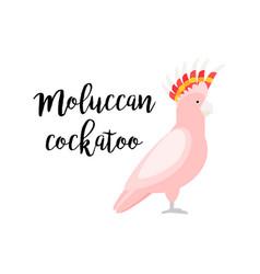 pink tropical moluccan cockatoo parrot vector image