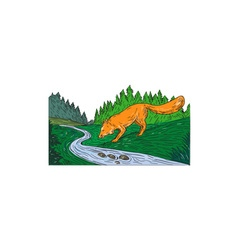 Fox Drinking River Woods Creek Drawing vector