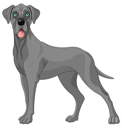 great dane vector image