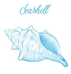 sea shell hand drawn blue linear vector image