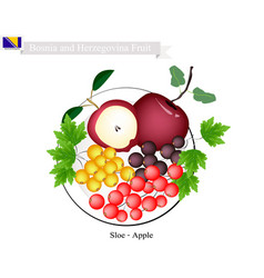 Sloe and apple popular fruits of bosnia and herze vector