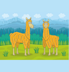 two llamas vector image