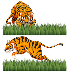 Two scenes of wild tiger vector