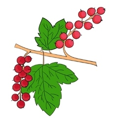 Currants plant fruits vector