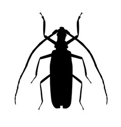 Large Beetle Silhouette vector image