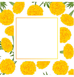 Yellow marigold on white banner card vector