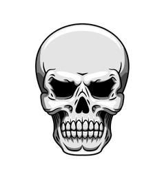 Gray human skull on white vector image vector image