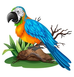 Parrot with blue and yellow feather vector image vector image