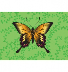 butterfly vector image