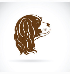 Cavalier king charles spaniel dog on white vector