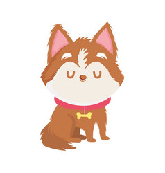 cute little dog with collar pet isolated icon vector image
