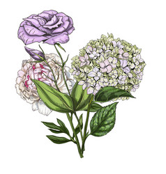 Hand drawn bouquet phlox eustoma and peony vector