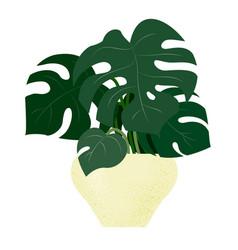 plant indoor monstera deliciosa in cartoon style vector image