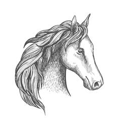 Sketched horse head icon of arabian stallion vector