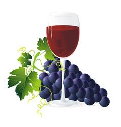 vineyard vector image