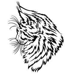 Maine coon kitten vector