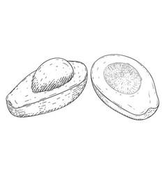 avocado hand drawn sketch vector image