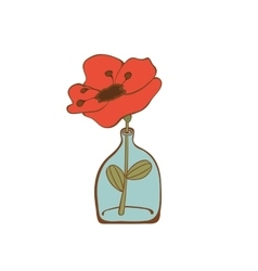 Beautiful poppy flower in glass bottle vector