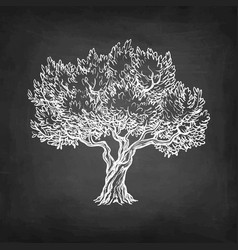 Chalk sketch of olive tree vector