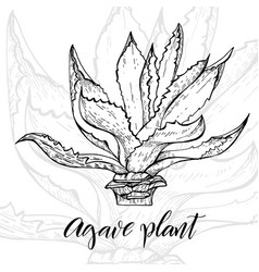 Hand drawn agave plant vector