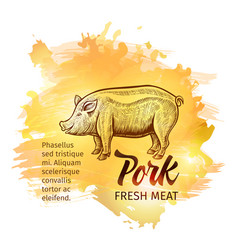 hand drawn sketch pig pork fresh meat background vector image