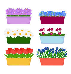 house and garden flowers in long pots vector image