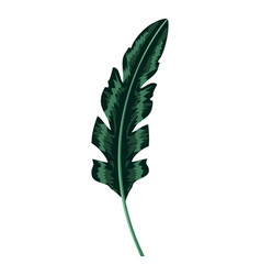 natural exotic leaf branch style vector image