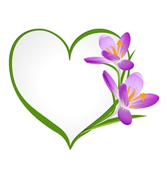 Purple crocus with a frame in the shape of heart vector image vector image