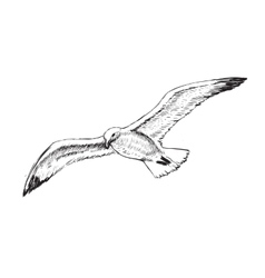 Flying Seagulls Hand Drawing vector image