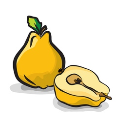 Quince fruits sketch drawing vector image