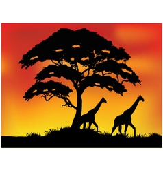 Safari background vector image vector image