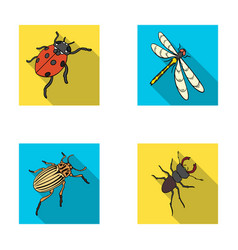 arthropods insect ladybird dragonfly beetle vector image