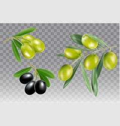 black and green olive branch icon set vector image