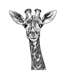 Portrait cute giraffa hand drawn ink sketch vector