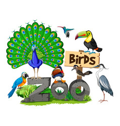 Different kinds of birds in the zoo vector