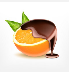 orange fruit with chocolate vector image