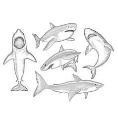 shark hand drawn water creature flowing big vector image