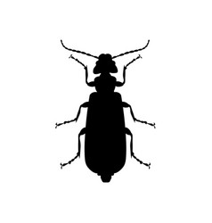 spanish fly beetle vector image