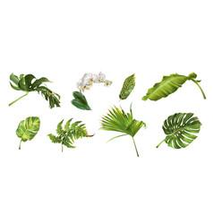 Tropical plants set vector