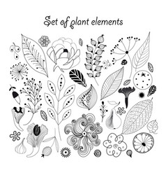 beautiful graphic set with plants vector image
