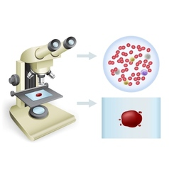 Blood under a microscope vector