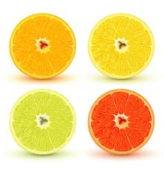 citrus fruits vector image