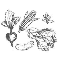 Colorless graphic vegetables at random on white vector