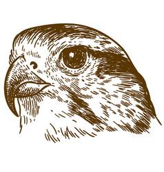Engraving drawing falcon head vector