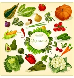 Fresh vegetable poster for food design vector image