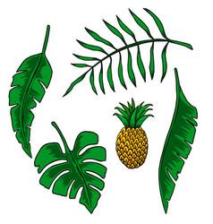 leaves tropical plants design element vector image
