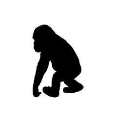 Little chimpanzee vector